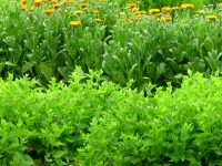 1-spring-garden-maldon