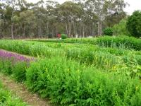 11-early-summer-garden